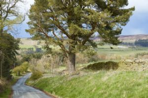 Bale Hill, the road towards local Blanchland