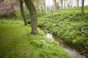 Explore the garden with trickling stream, that attracts local wildlife