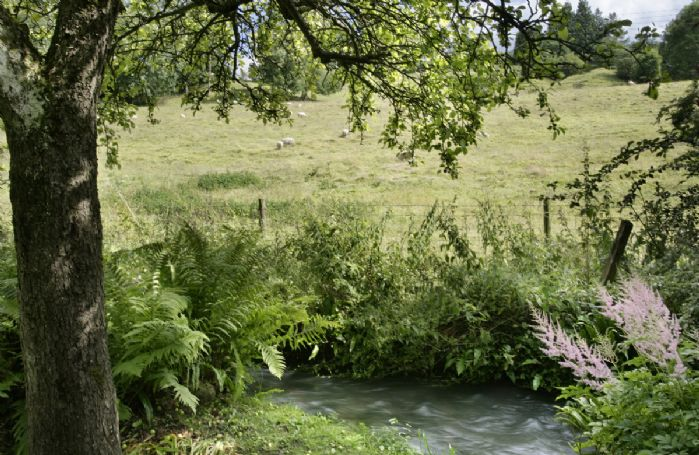 Unfenced stream in the garden