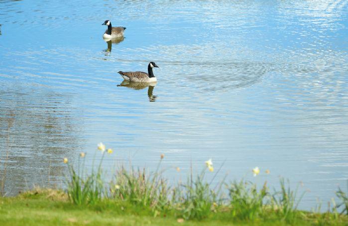 An abundance of delightful wildlife in this stunning rural location