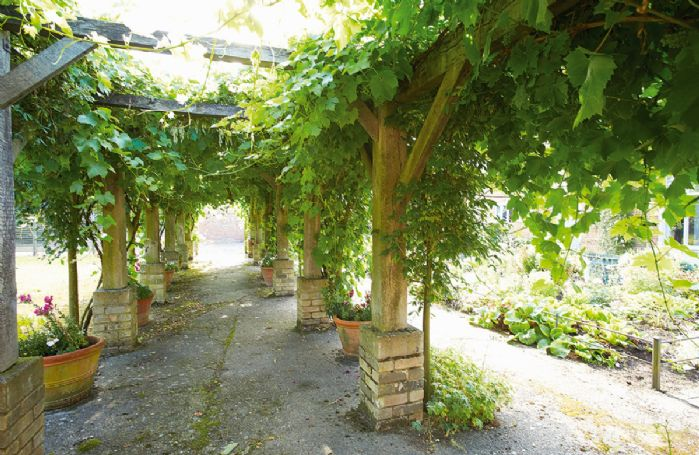 The barns are approached via a grape and laburnum covered pergola