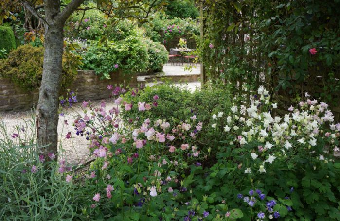 A glimpse through the flowers to the patio area