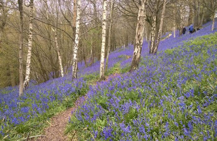 Beautiful woodland walks nearby