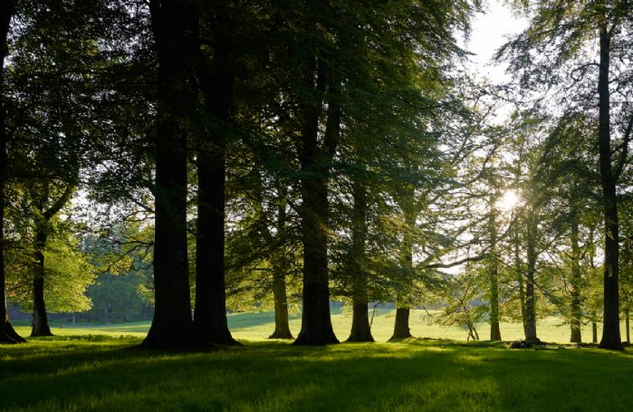 Enjoy walks through Fasque Estate woods