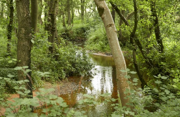 Explore the woodland streams and footpaths on Glen Bank's doorstep
