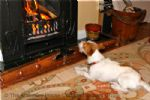 Thumbnail Image - Tail End Cottage - Dog friendly holiday cottage, Rye