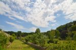 Thumbnail Image - The terraced gardens