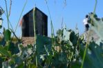 Thumbnail Image - Dungeness Nature Reserve