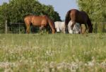 Horses grazing close by to the property