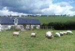 The property is situated on a working sheep farm and guests are welcome help feed the animals