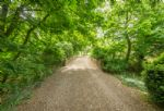 Grand, picturesque driveway to Witnesham Hall