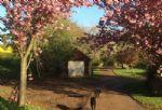 A pretty aspect of the garden