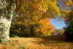 An autumn wood