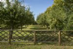 Views to neighbouring orchards