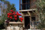 Colours around the Garden