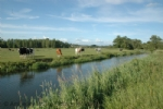 Thumbnail Image - The River Rother