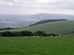 Thumbnail Image - The South Downs above Bignor