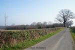 Thumbnail Image - Peasmarsh quiet country lanes