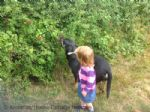 Thumbnail Image - Child and Pet Friendly