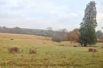 Thumbnail Image - Countryside surrounding the cottage