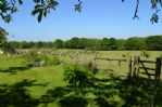 Thumbnail Image - Bluebell meadows