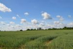 Thumbnail Image - Byways through the local fields towards Petworth