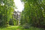 Thumbnail Image - Tennyson's Lane, National Trust trail near Oak Grove
