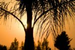 Sunset through the Palms