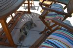 Thumbnail Image - Old River Way - Winchelsea Beach, dog friendly holiday cottage