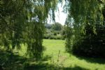 Thumbnail Image - Views to the Downs through the willow trees