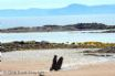 The Beach Hut - view to Isle of Arran from beach