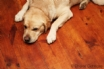 Devon doggy paradise