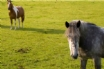Say hello to the ponies in Devon