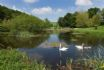 Pitcairlie House nature pond with swans