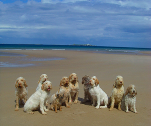 dog friendly beaches throughout North Northumberland